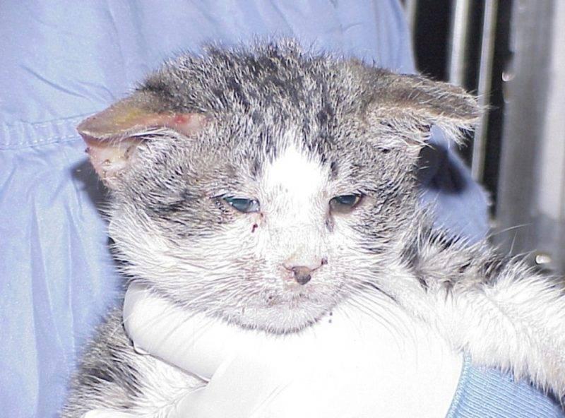 Вирусные заболевания собак и кошек