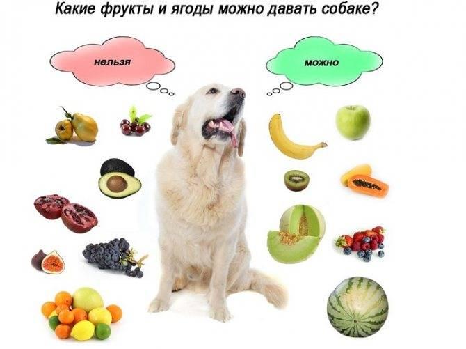 Сырое мясо для собак: можно ли давать, польза и вред