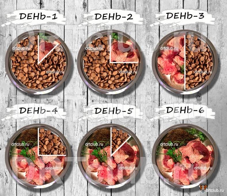 Можно ли кормить собаку натуральным и сухим кормом одновременно и как это правильно делать?