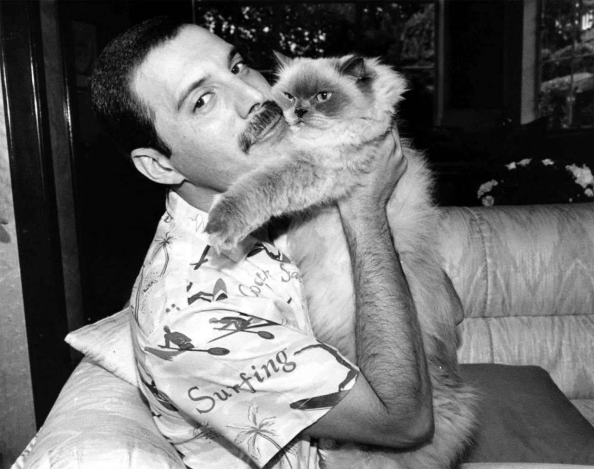 Модные и современные клички кошек и котов