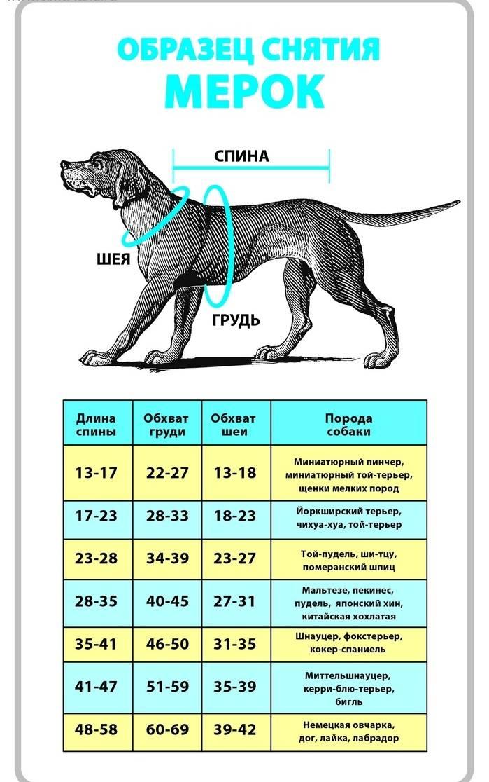 Вес щенка немецкой овчарки в 2 месяца