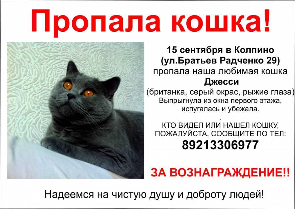 Что делать если кот потерялся, как найти кошку если она потерялась