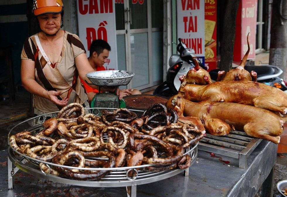 Едят ли корейцы собак