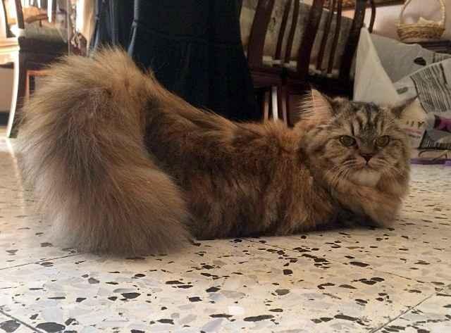 Кошка гуляет, как успокоить