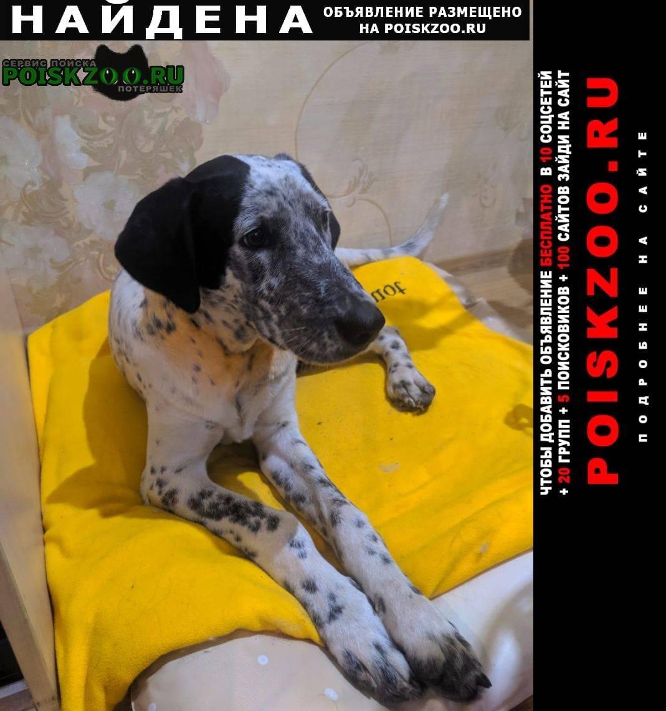 Лимфаденит (воспаление лимфоузлов) у собак | ветеринарная клиника берлога