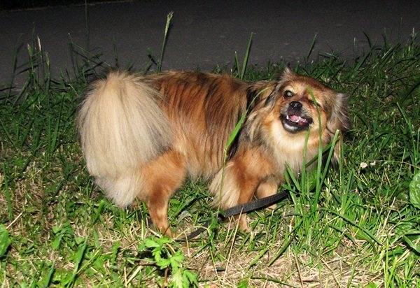 Обучение собаки команде фас: эффективные методы дрессировки