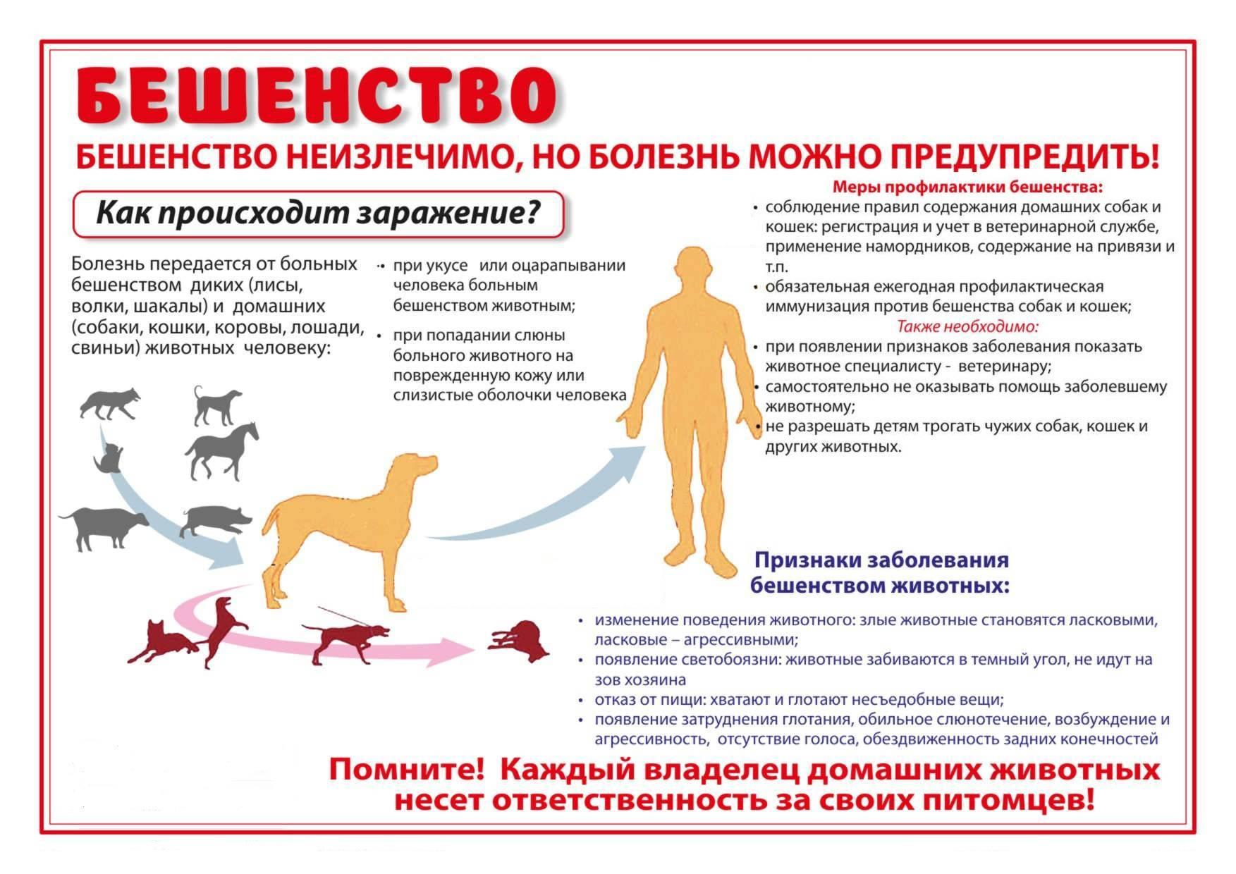 Собачки, котики, ежики, лисы и белки — как они убивают людей бешенством