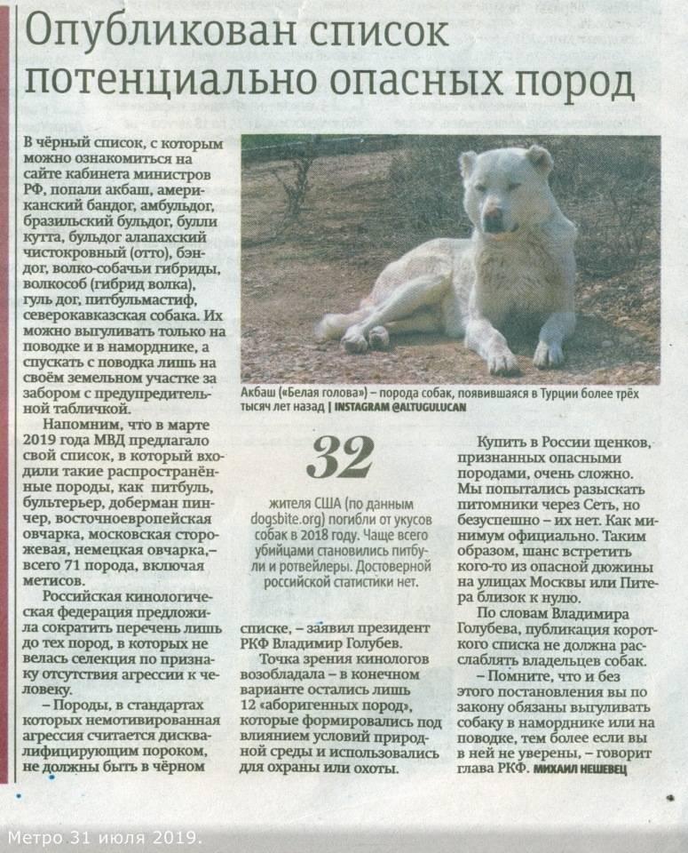 Самые опасные породы собак в мире: официальный список в россии, описание