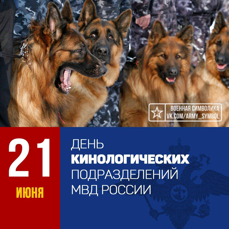 Праздники братьев наших меньших: всемирный день домашних животных и другие
