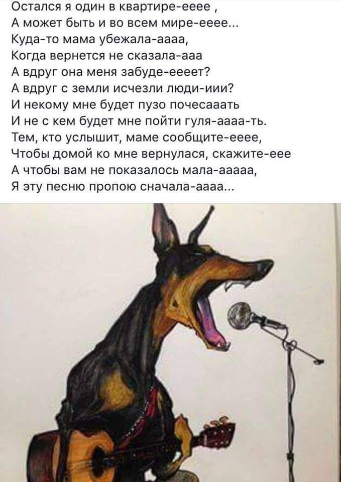 Воет собака: приметы, во дворе, в доме, ночью, днем, утром, у соседей