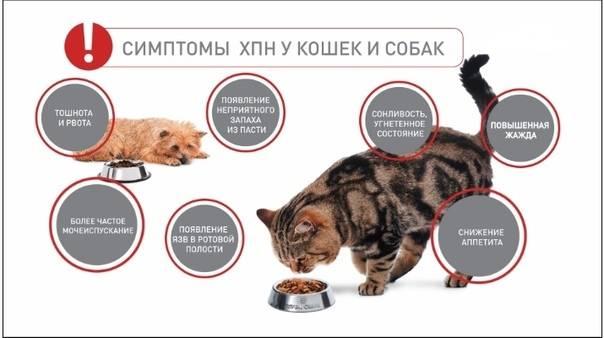 Хроническая почечная недостаточность у кошек