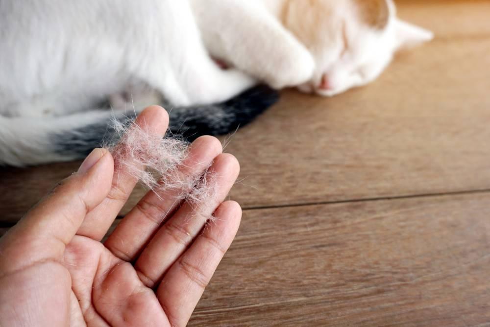 Линька у кошек: как помочь избавиться, профилактика, корм