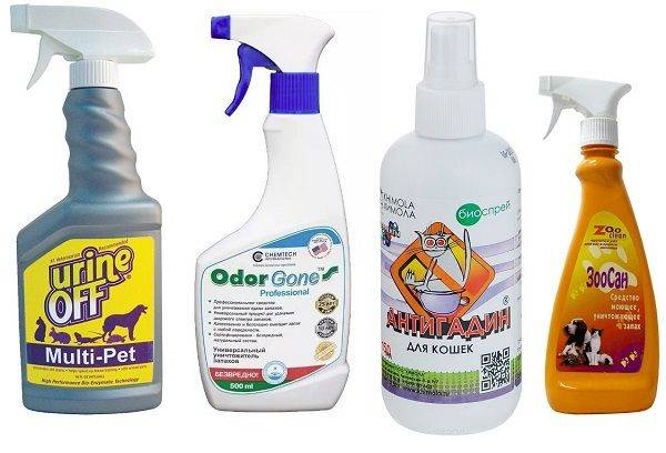 Как избавиться от запаха кошачьей мочи: лучшие средства и способы