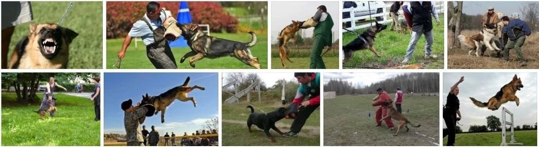Команды для собак: как научить собаку командам