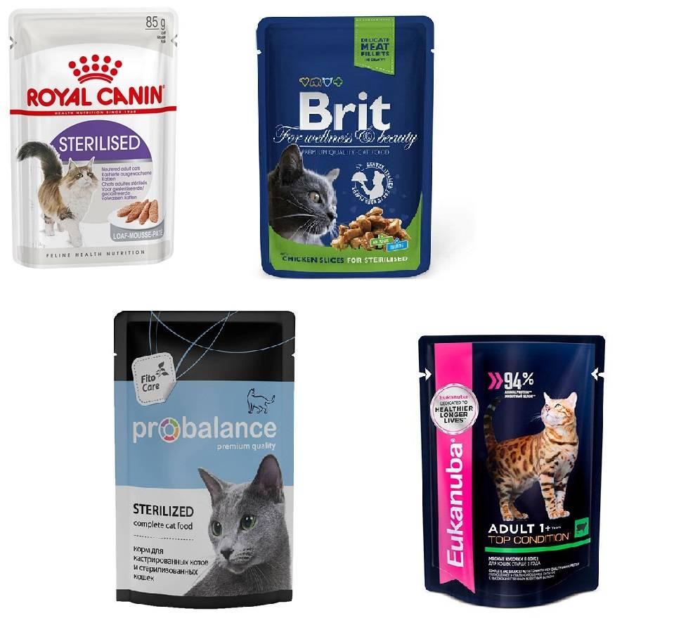 Рейтинг влажных кормов для котят: какой лучший, обзор известных марок, премиум класс, отзывы ветеринаров и владельцев