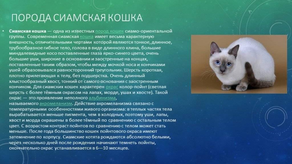 Кот с косоглазием