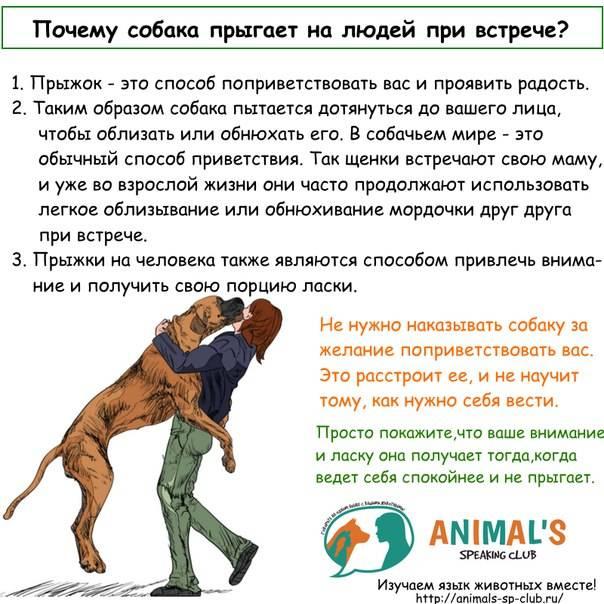 Как научить собаку приносить палку, игрушку, учим собаку бегать за палкой по команде принеси - dogtricks.ru