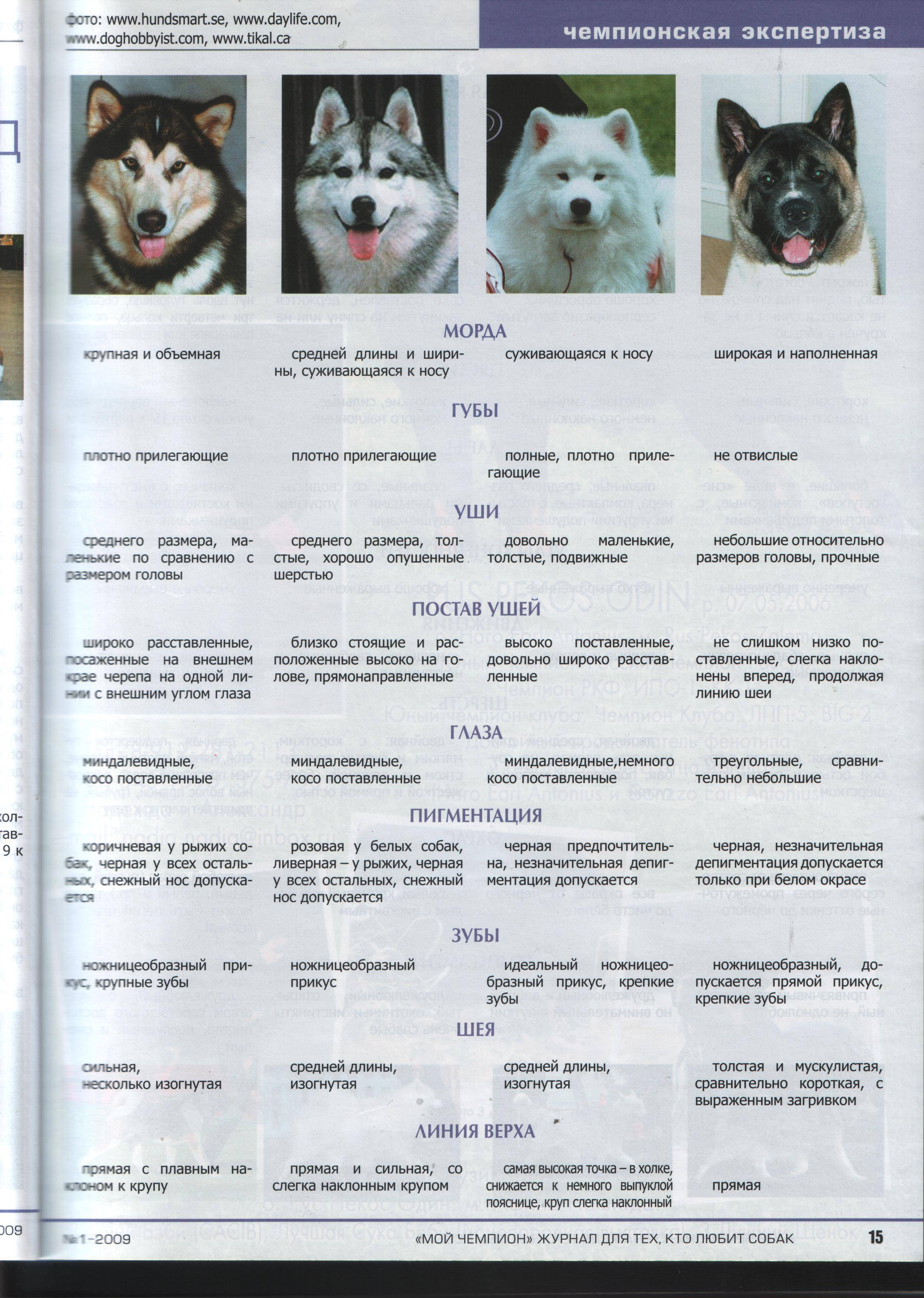 Лайка и хаски: основные отличия между породами с фото