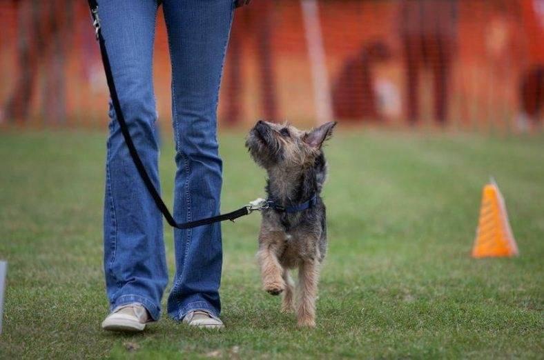 Как научить собаку командам: применение и техника отработки | сайт о маленьких собачках и не только