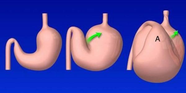 Заворот кишок: причины, клиническая картина, принцип лечения