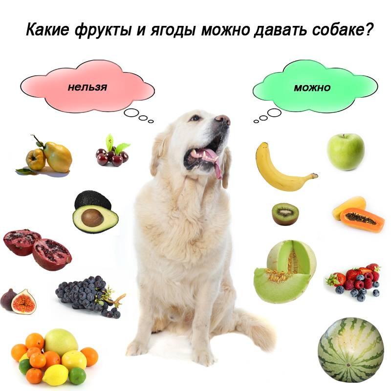 Можно ли давать собаке сыр?
