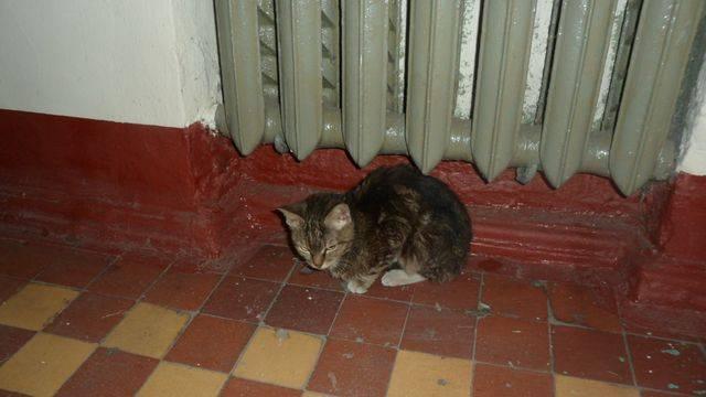 Кошка и кот все метит в доме: советы, что делать, как отучить и убрать запах