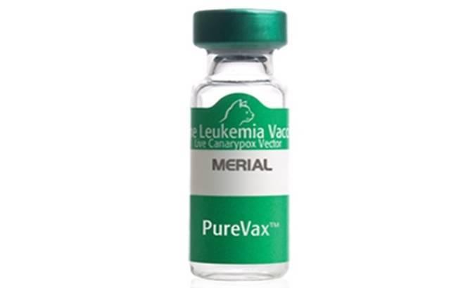 «пуревакс» вакцина для кошек: инструкция по применению, как сделать прививку кошке самостоятельно, отзывы