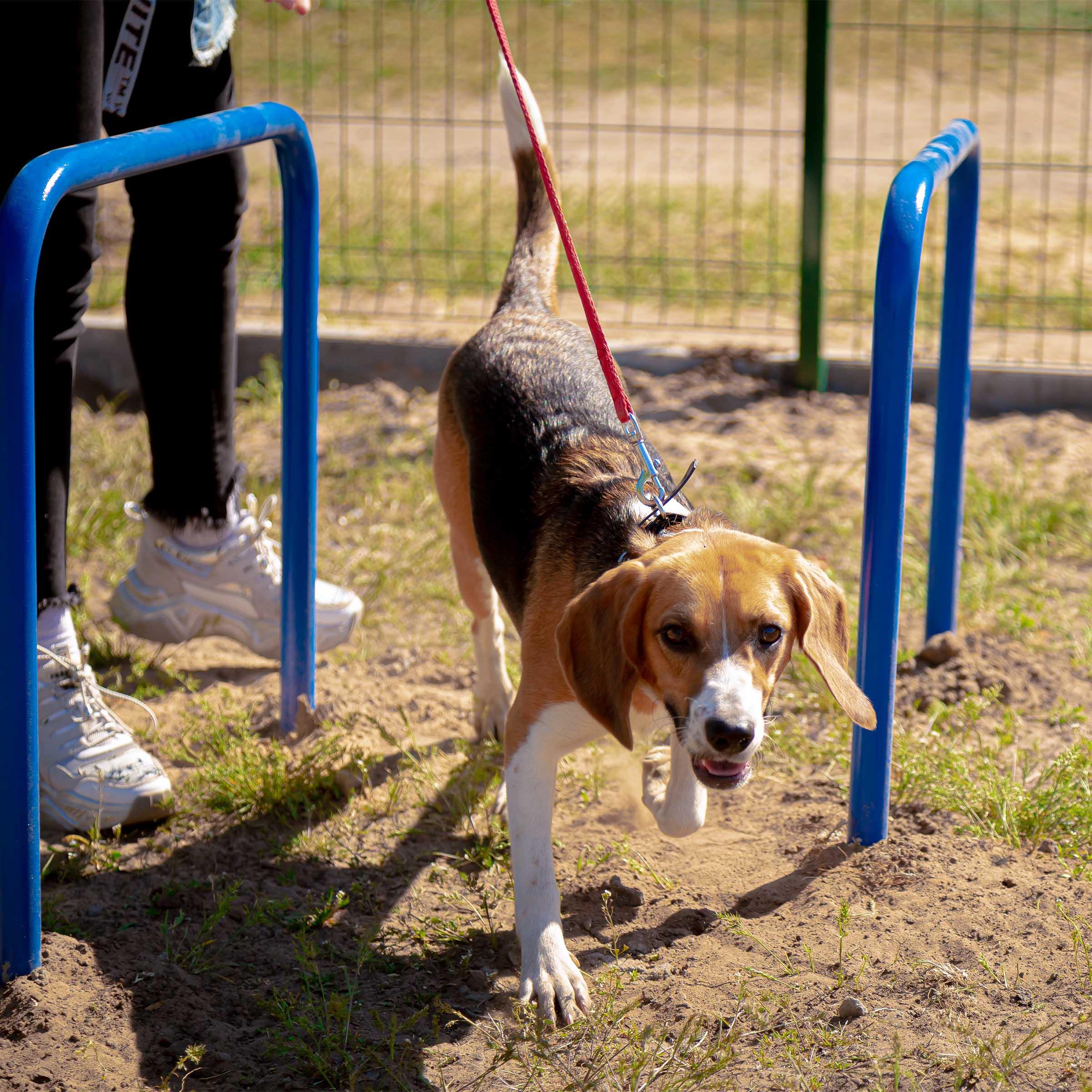 Вольерное содержание служебных собак