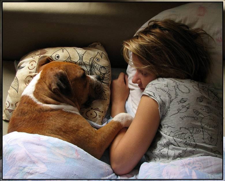 Собака спит с хозяином в одной постели: что это значит