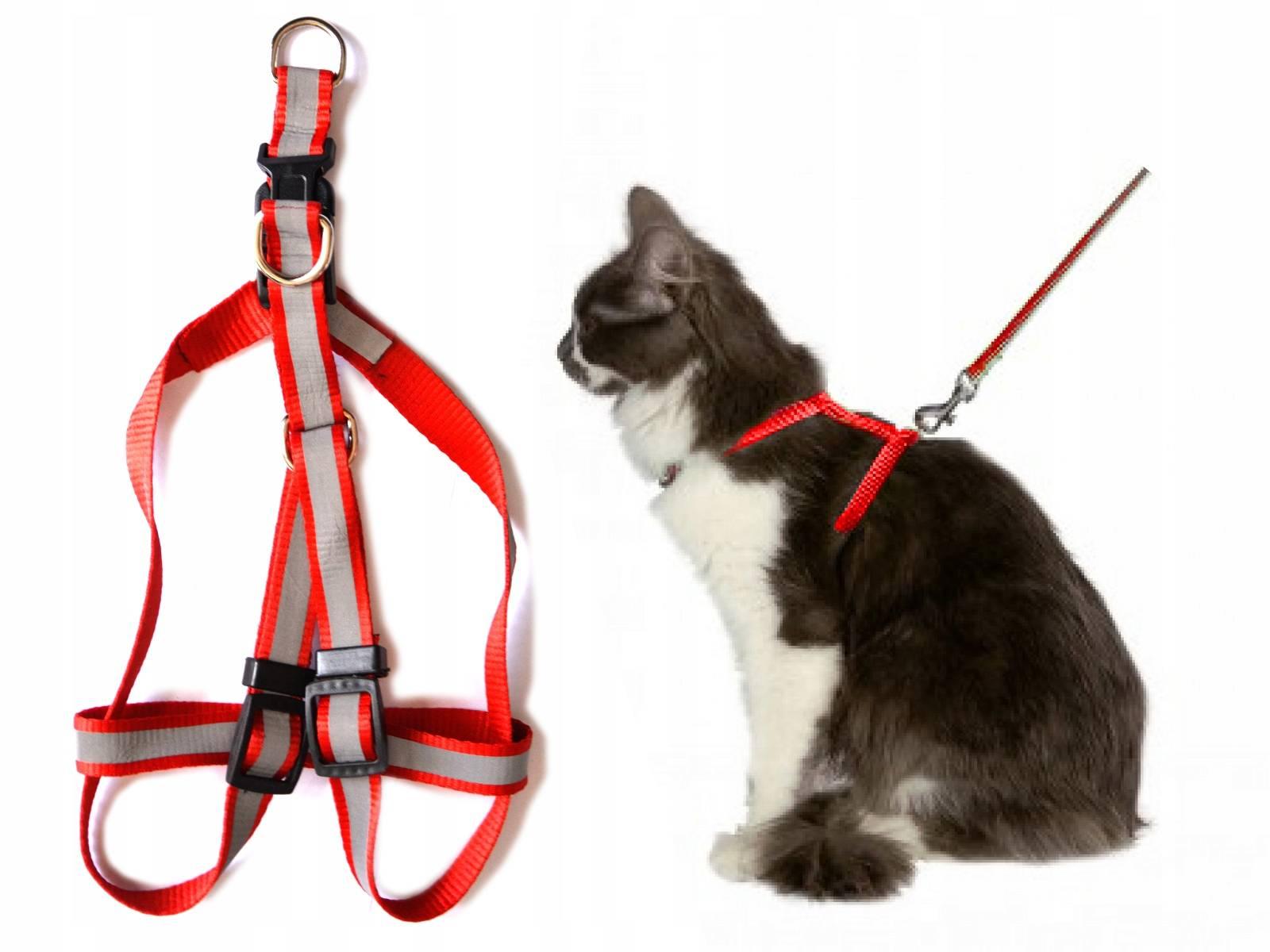 Как одевать на собаку шлейку: пошаговая инструкция и полезные советы
