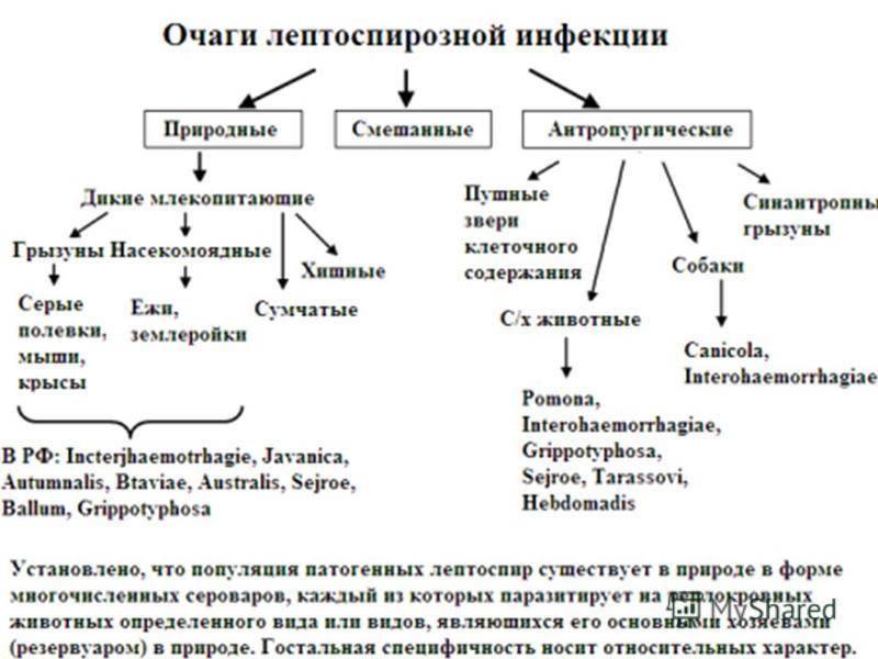 Зооантропонозы: часть первая. Бактерии