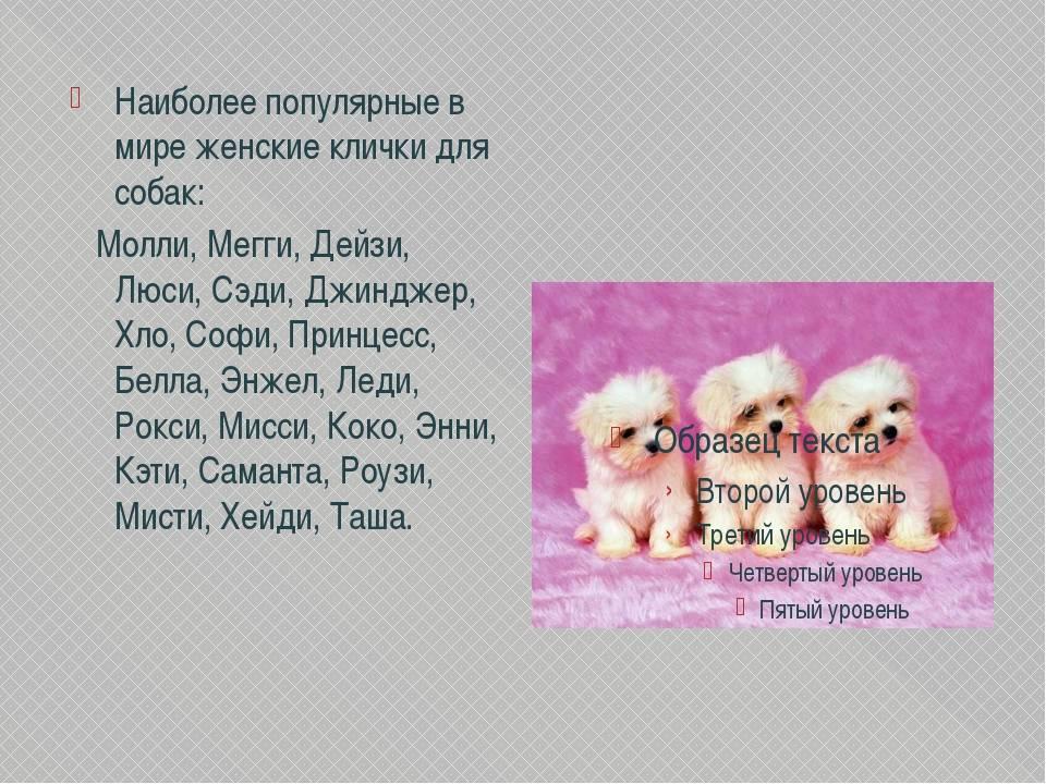 Как назвать собаку мальчика? имена для собак мальчиков, редкие и красивые, для маленькой породы, большой, охотничьей, бойцовской, дворняжки, черной, рыжей, белой: список имен со значением