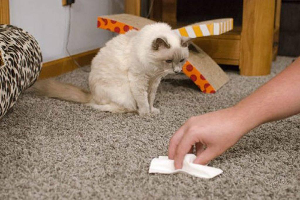 Что сделать, чтобы коты не метили входную дверь?