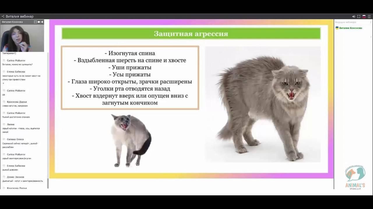 Как убрать агрессию к котам и подружить собаку с другими животными?