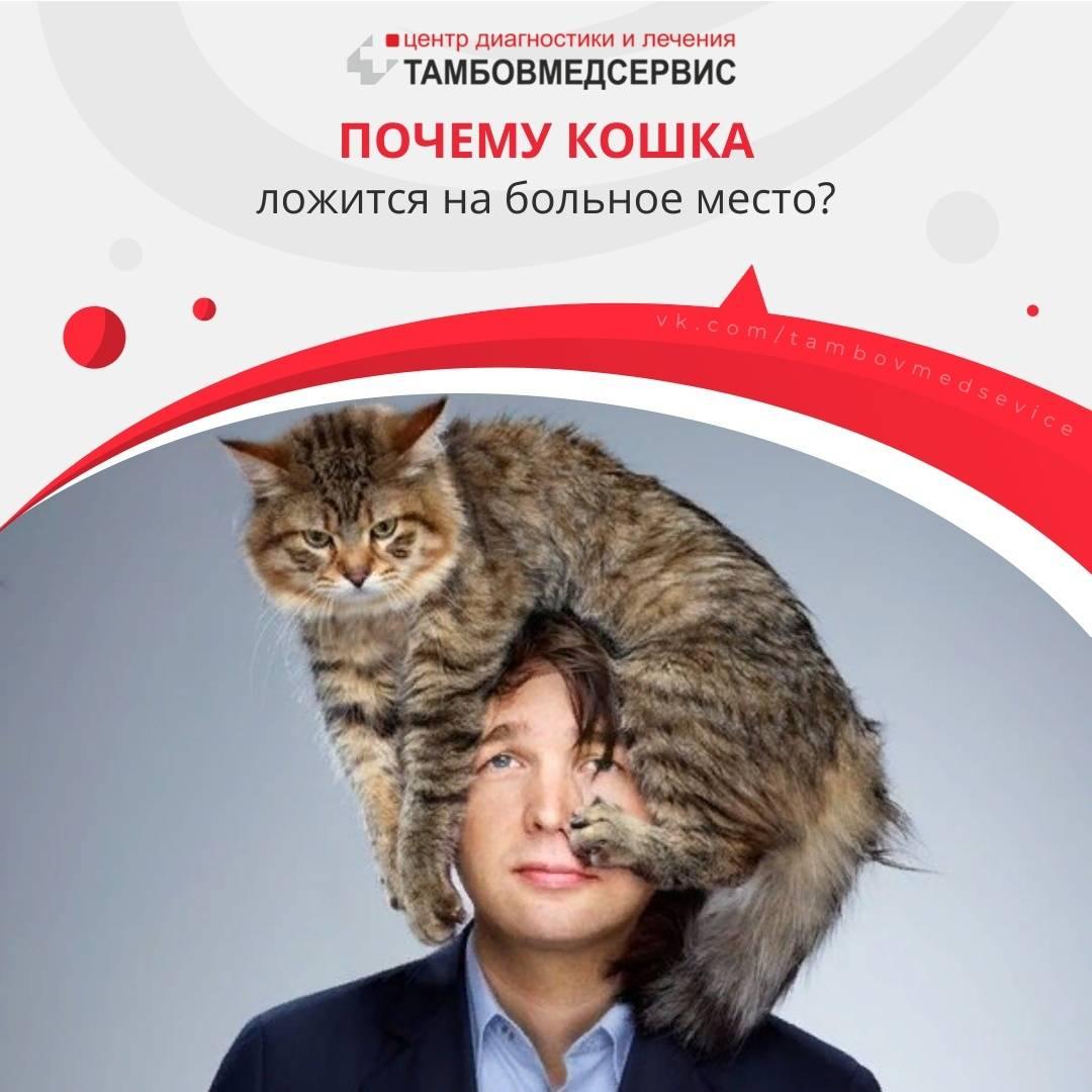 Трение кошек о ноги человека и мурлыканье могут многое рассказать об их состоянии : мозаика на портале newsland