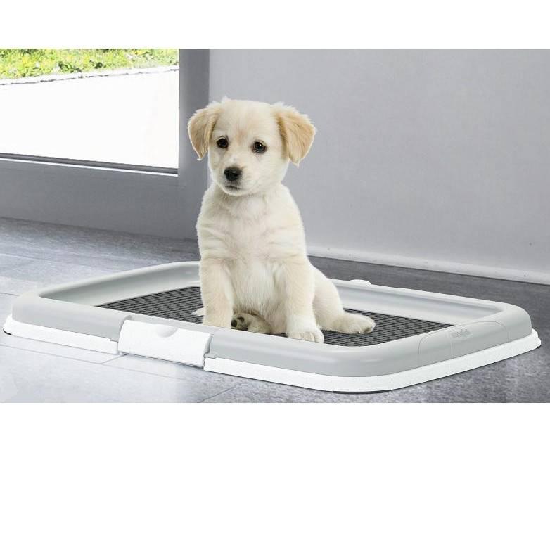 Лоток для собак мелких пород - виды и конструкция, обзор моделей от лучших производителей с фото и ценами