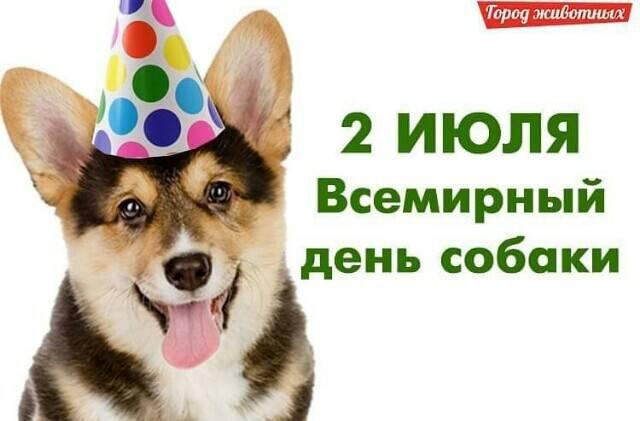 День кинолога: какого числа отмечают в россии, история праздника в 2021 году