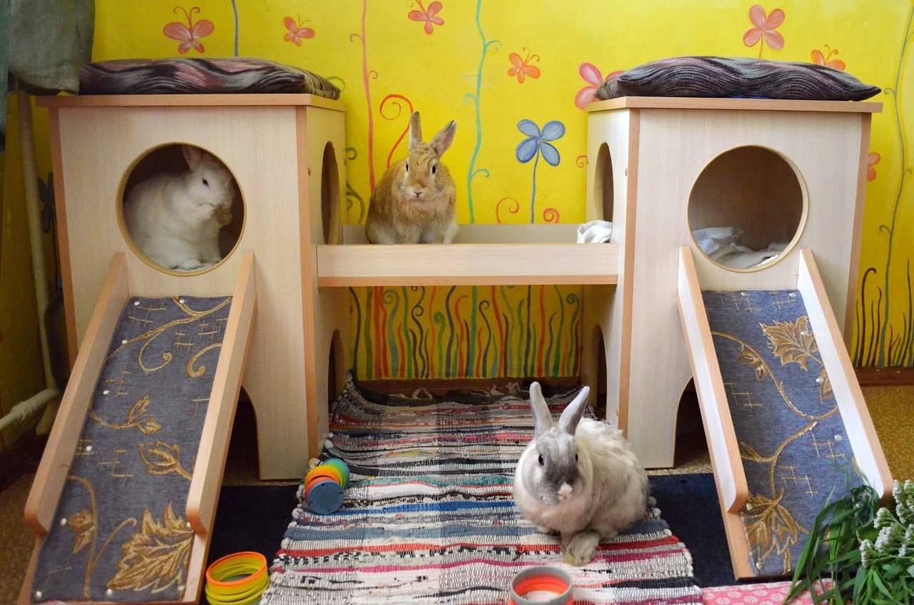 Домик для кролика своими руками. инструкция изготовления деревянного дома для декоративных питомцев в домашних условиях. делаем место грызуну