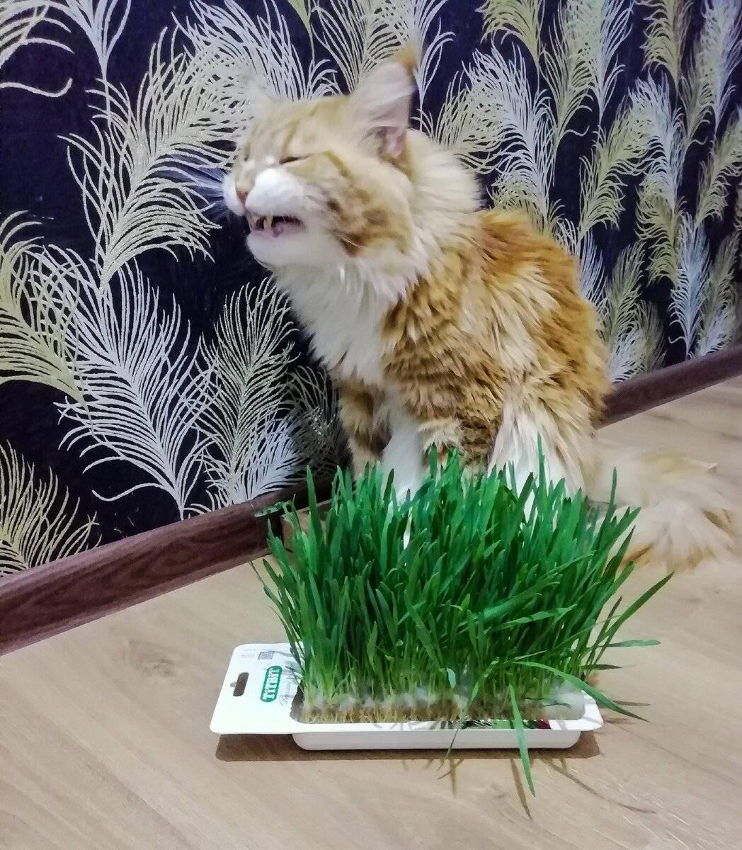 Какую траву любят кошки и как вырастить траву для кошек – pet-mir.ru