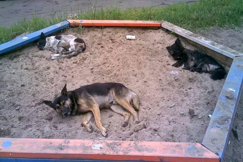 Можно ли хоронить животных на кладбище