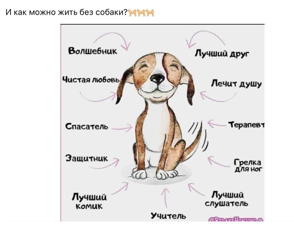 Имена и клички для мальчика щенка: красивые, модные, прикольные