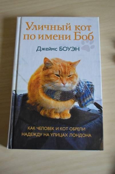 4 породы кошек, которым нравится жить в чатном доме