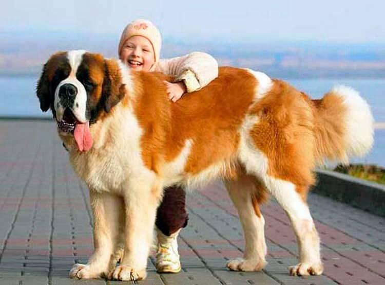 Самые добрые собаки – топ-10 пород с фото и описанием