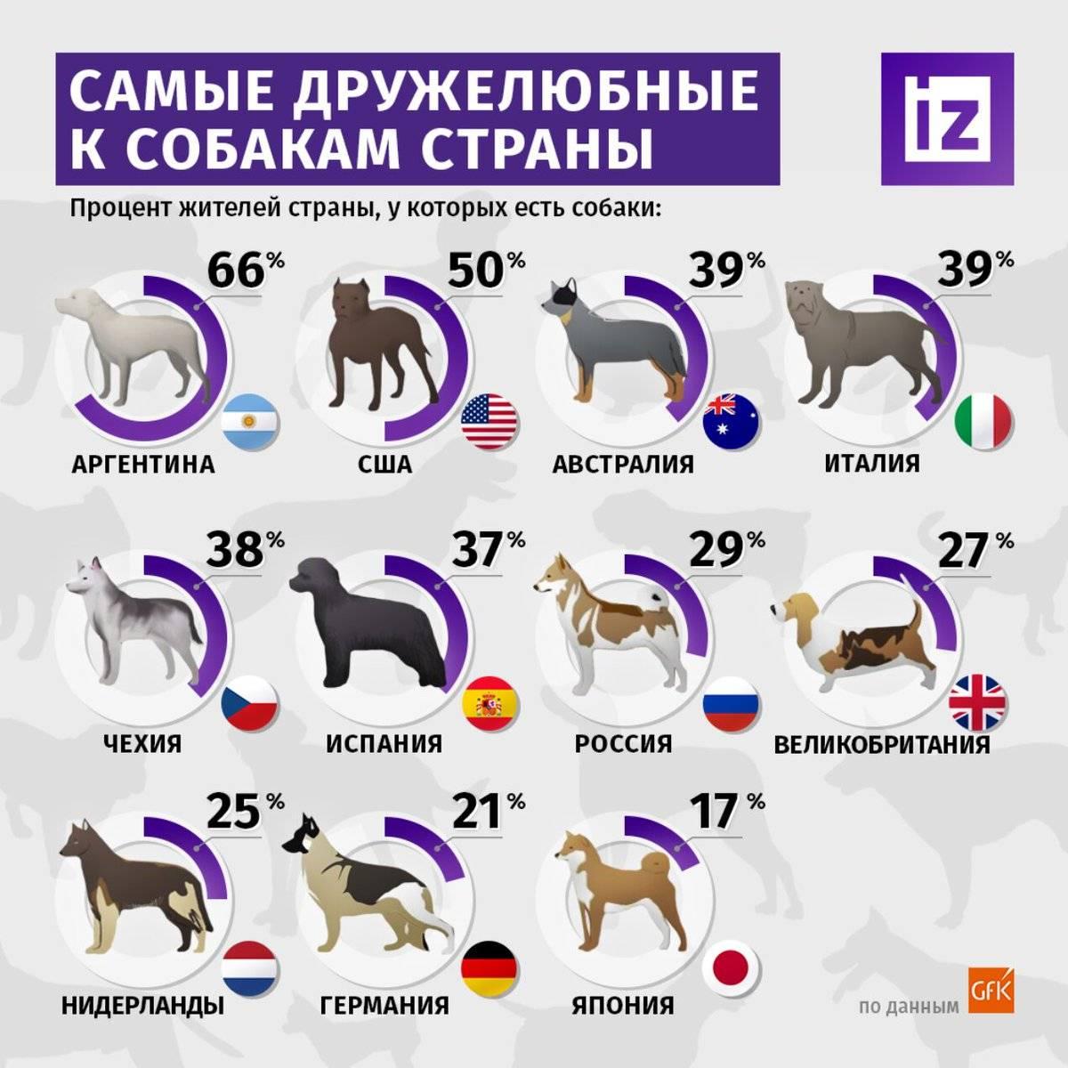 Всемирный день животных в 2021 году: какого числа отмечают, дата и история праздника