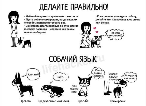 Понимают ли собаки людей