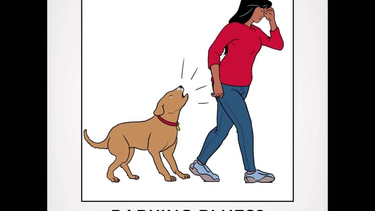 Что делать если у соседей постоянно лает собака