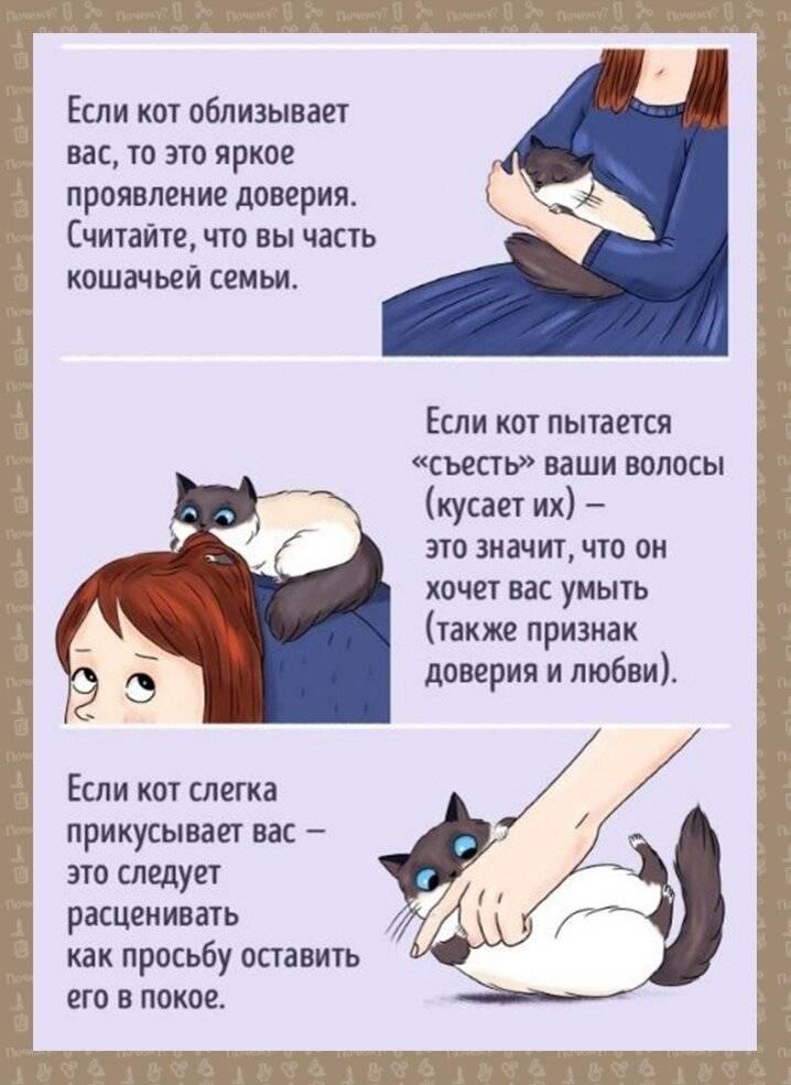 Ученые выяснили, длячего насамом деле нужны «шипы» наязыке кошки (2фото+2гиф)