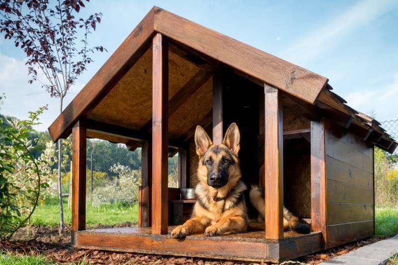 Как приучить щенка ходить в одно место? частный дом. - спроси у бывалых - страна мам