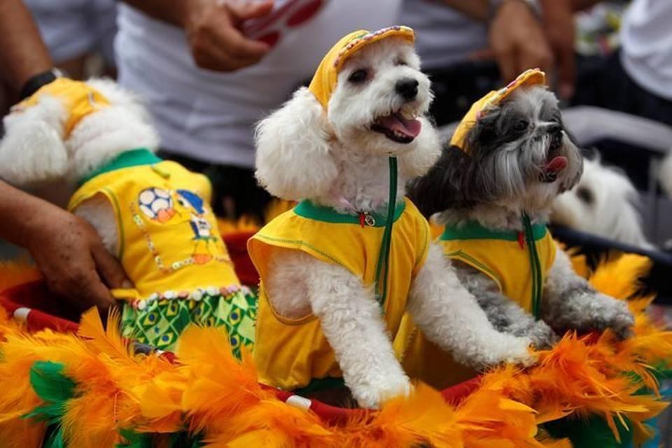 Карнавал в бразилии. и в рио де жанейро