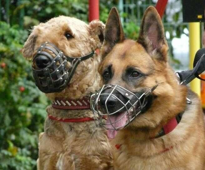 Правила выгула собак в 2021 году по закону о содержании животных | юридические советы